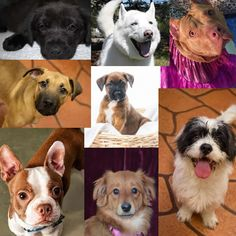 Dogs for adoption or sale in Michigan  http://www.doggielife.com/dogs?rids=21&p=1