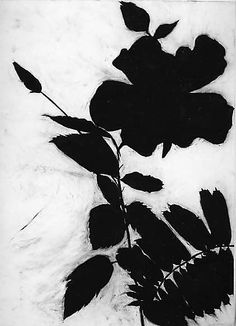 Chinese Hibiscus  Susan Davidoff  (American, born 1953) - charcoal on paper #drawing #art