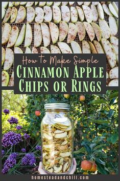 Dehydrating Apple Chips Come learn how easy it is to dehydrate apples into apple chips, or soft rings! Use your homegrown harvest or local produce to create this perfect healthy, naturally-sweetened snack. Cinnamon Apple Rings, Cinnamon Chips, Cinnamon Apples, Making Apple Cider, Make Apple Cider Vinegar, Dried Apple Chips, Dried Apples, Nutritious Snacks, Healthy Eating Recipes