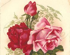 rose cards in watercolor with vases - Google Search