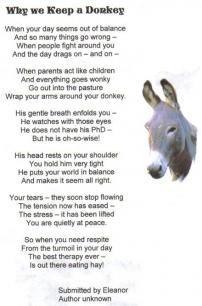 Why we keep a Donkey. Donkey Donkey, Baby Donkey, Cute Donkey, Mini Donkey, Donkey Pics, Donkey Images, Donkey Funny, Baby Cows, Funny Farm