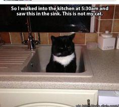 Cats always make me laugh