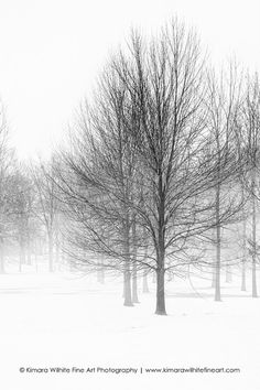 Black and White Print Trees in Winter, Landscape, Nature
