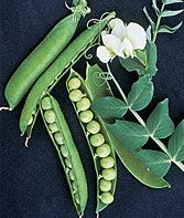 Find the best Pea seeds that are prolific and high-yielding. Easy-to-grow organic, heirloom, snap, snow, sweet shelling pea seed varieties for your garden. Veg Garden, Garden Seeds, Planting Seeds, Burpee Seeds, Sweet Pea Seeds, Garden Bed Layout, Types Of Vegetables, Gardening Vegetables, Ornaments