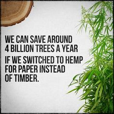 We can save around 4 Billion trees a year if we switched to hemp for paper instead of timber. Is it any wonder it was one in the timber industry that helped to discredit hemp and marijuana in the first place? Greedy bastards!