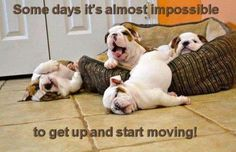 funny pics so true