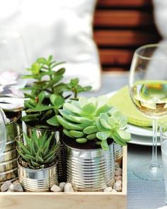 succulents in tins, on a tray, with little rocks = great table topper/centerpiece/living decoration #garden #succulents