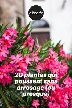 20 plants that grow without watering or almost Paint Your House, Plantar, Green Life, Permaculture, Horticulture, Botanical Gardens, Outdoor Gardens, Modern Gardens, Flower Power