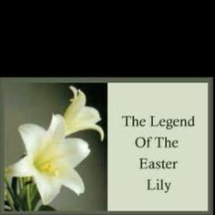 "Legend of the Easter Lily  Often called the ""white-robed apostles of hope,"" lilies were found growing in the garden of Gethsemane after Christ's agony. Tradition has it that the beautiful white lilies spring up where drops of Christ's sweat fell to the ground in his final hours of sorrow and distress. Christian churches continue this tradition at Easter by banking their altars and surrounding their crosses with masses of Easter lilies to commemorate the Resurrection and hope of life…"