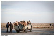Camel check-up, Mauritania [http://www.flickr.com/photos/btwienclicks/]