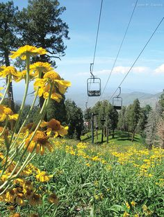 Mount Lemmon Sky Ride, near Tucson, Arizona: this is one of my favorite childhood memories ♥