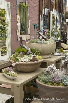 Driftwood in arrangements at the Succulent Cafe in Oceanside - www.succulentsandsunshine.com