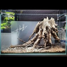 Decorative Rocks Ideas : All the hardscape needed for this setup. What a great find! Aquarium Diy, Fish Aquarium Decorations, Biotope Aquarium, Aquarium Garden, Aquarium Terrarium, Aquarium Driftwood, Aquarium Landscape, Tropical Fish Aquarium, Aquarium Setup