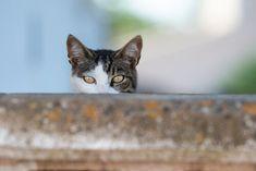 ¿Es posible predecir la personalidad felina? Hay estudios científicos que afirman que los rasgos de conducta de tu gato están asociados a factores genéticos