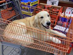 How much is that doggie in the trolley?