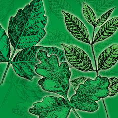 Poison Ivy, Poison Oak and Poison Sumac: Tips for avoidance and treatment of rash/blisterence