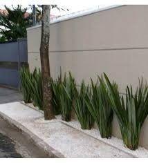 Patio Shade, Shade Garden, Modern Landscaping, Front Yard Landscaping, Hotel Cactus, Garden Great Ideas, Drought Tolerant Garden, Plant Decor, Garden Design