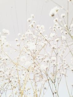 - white hues - now this has always worked for me. it is a flower in it's own right and is light, fluffly and even lighter: Black And White Aesthetic, Aesthetic Colors, Beige Aesthetic, Flower Aesthetic, Aesthetic Photo, Aesthetic Pictures, Photo Wall Collage, Picture Wall, Aesthetic Backgrounds
