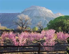 Palisade colorado wine country inn - Google Search
