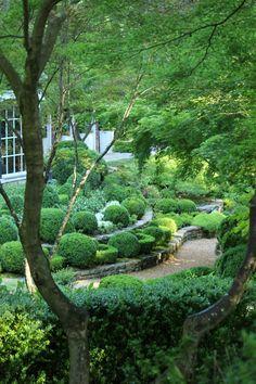 boxwood garden that is always green