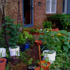 Urban Container Garden (from my house last year)