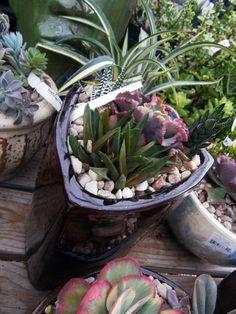 New custom designed succulent planters