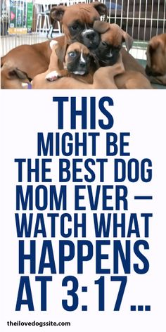 This Might Be The Best Dog Mom Ever! Watch What Happens At 3:17!