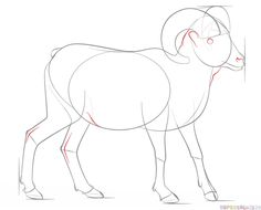 How to draw a bighorn sheep step by step. Drawing tutorials for kids and beginners.