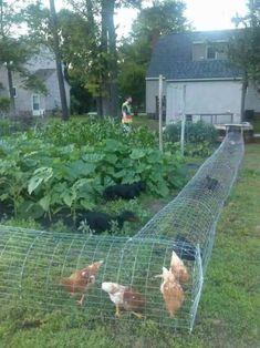 Backyard Organic Gardening This Summer 13 Backyard Chicken Coop Plans, Building A Chicken Coop, Diy Chicken Coop, Chicken Feed, Chicken Waterer, Chicken Coup, Backyard Birds, Chickens Backyard, Chicken Tunnels