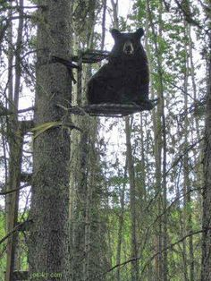 I got to my tree stand and someone else was using it. So I let him stay - seemed like the right thing to do at the time...