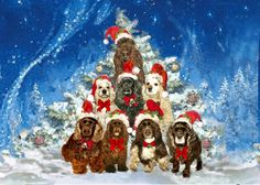 Rita's Treedogs 2