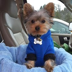 #Repost @iruffyorkie  It's Monday and it's cold! Ugh...stay warm my friends!