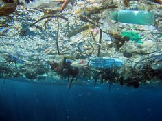 Wait a Minute—Don't Clean the Garbage Patch? Ocean Garbage Patch, Great Pacific Garbage Patch, Ocean Pollution, Plastic Pollution, Ocean Cleanup, Marine Debris, Save Our Oceans, Marine Conservation, Davos