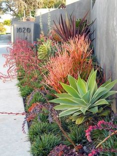 Discover color in dry, arid climates with the top 70 best desert landscaping ideas. Explore unique drought tolerant plants with softscapes and hardscapes. Succulent Landscaping, Modern Landscaping, Outdoor Landscaping, Landscaping Plants, California Front Yard Landscaping Ideas, Landscaping Front Yards, Arizona Backyard Ideas, Arizona Landscaping, Low Maintenance Landscaping