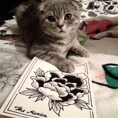 Flower tattoo on sketch (on paper) black and grey by The Mexica Flower Sketches, Mexica, Tattoo Photos, Russia, Black And Grey, Tattoos, Cats, Paper, Flowers