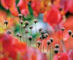 W mroźne poranki wszystkie suszki odzyskają blask, kiedy pokryją się koronkami ze szronu i szadzi.
