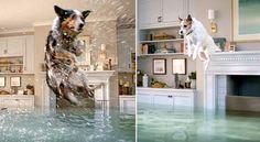 Des chiens participent à une hilarante compétition de plongeon digne des JO dans…