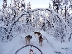 Dogsledging in the north of Sweden, Kiruna.