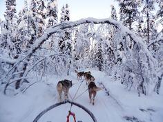 Dogsledging in the north of Sweden, Kiruna.