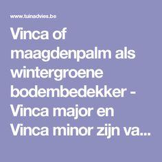 Vinca of maagdenpalm als wintergroene bodembedekker - Vinca major en Vinca minor zijn vaste planten die kunnen woekeren