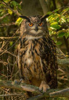 OWL - null