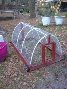 hey are living in the chicken tractor we built from scrap pallets, old pvc and a busted luggage cart.