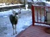 A Man Shares Breakfast With His Deer Friends - You Won't Believe How Many