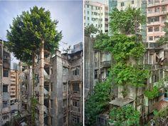 Bomen vs beton in Hong Kong - Hoe de natuur het wint op de beschaving Top Photos, Photos Du, Pictures, Hong Kong, Abandoned Ships, Abandoned Places, Abandoned Houses, Dame Nature, Mother Nature