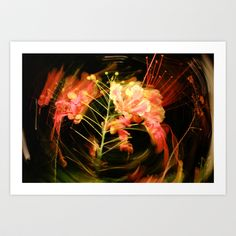Delonix regia Art Print by Celia Dias - $12.48