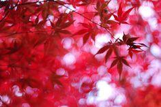 Colour manipulation of foliage