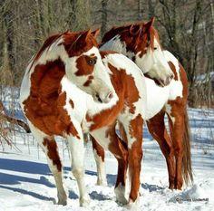 tickled-fancy HORSE PAINTS