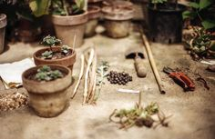 Hobbies // Alchemy - home gardening