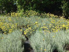 Combinações de aromas | Plantas aromáticas, medicinais e condimentares