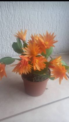 Easter Cactus, House Plant Care, Christmas Cactus, Cacti And Succulents, Houseplants, Orchids, Chili, Planter Pots, Gardening